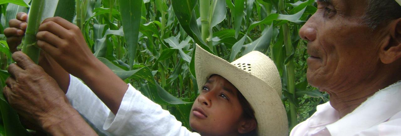 Presta atención a los cultivos
