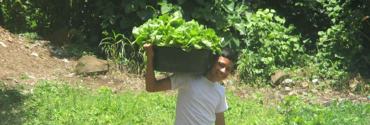 Cosecha de verduras
